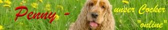 Private Homepage über unser Cocker-Mädchen Penny, Informationen über Englische Cocker Spaniel und unseren Cocker-Treffpunkt, Photo-Album, Gedanken/Humor zum Thema HUND, Animated Dog Gifs, Links ....